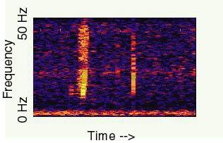 spectrograph.jpg